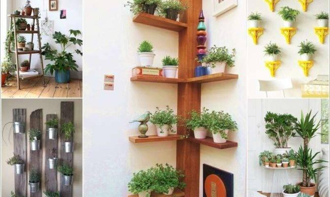 Amazing Ideas Display Your Indoor Plants