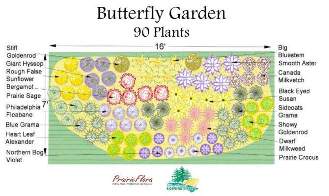 Awesome Hummingbird Garden Plans House