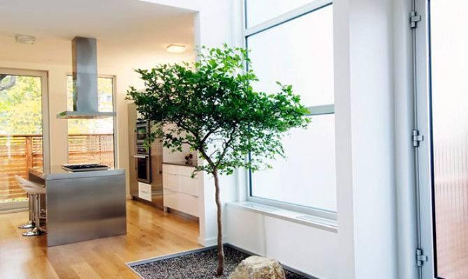 Beautiful Indoor House Plants Ideas