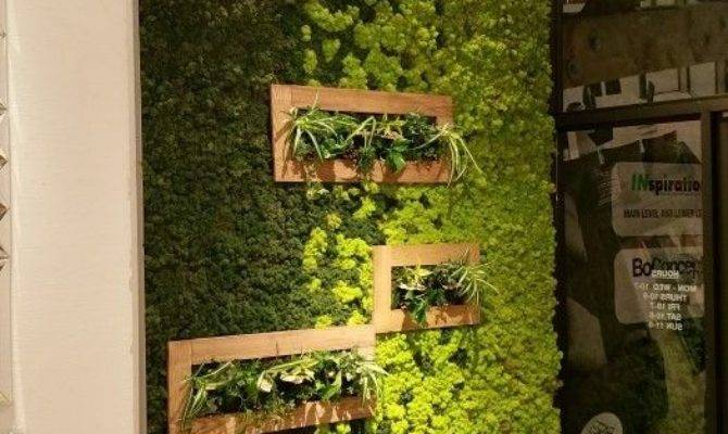 Best Moss Wall Ideas Pinterest Art Diy