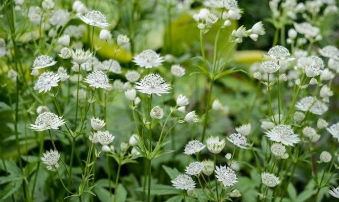 Best Shade Loving Plants Gardenersworld