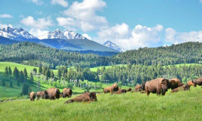 Bison Enthusiasts Gather Ted Turner Ranch