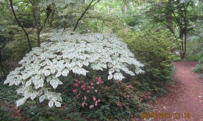 Brookside Gardens Wheaton Beoordelingen