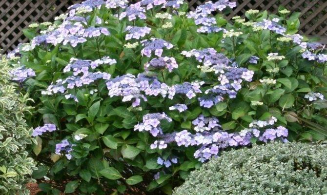 Coastal Gardening Shade Loving Plants Sea Coast