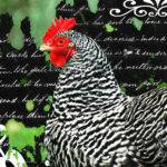 Coco French Country Chicken Print Adspice Studios