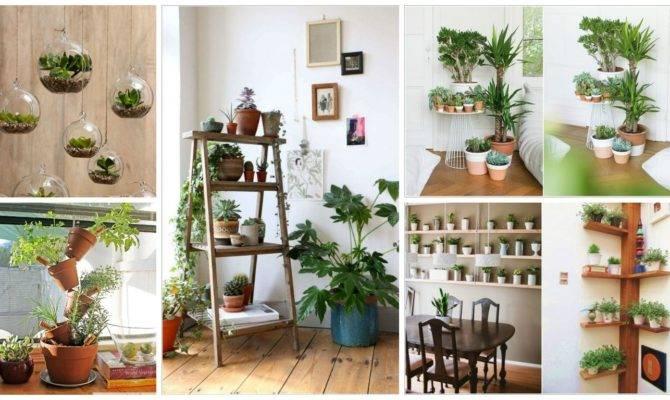 Creative Ideas Display Your Indoor Plants