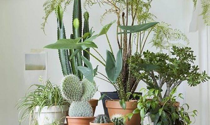 Creative Ways Include Indoor Plants Your Home