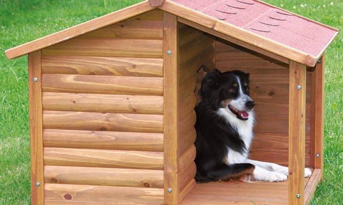 Diy Dog House Beginner Ideas