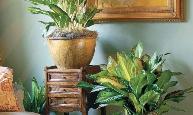 Easy House Plants Indoor Decor Ideas Decomg