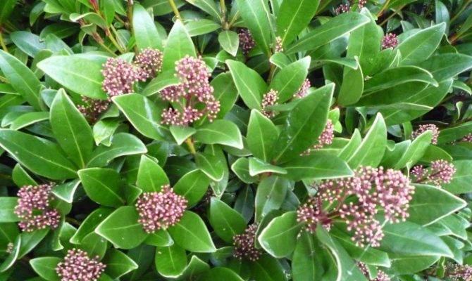 Elaeagnus Garden Care Services