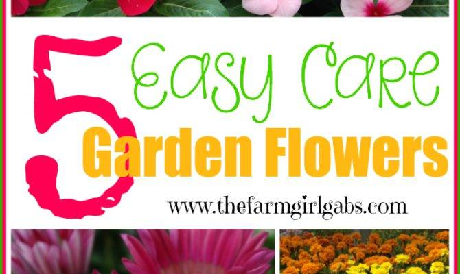 Five Easy Care Garden Flowers Thefarmgirlgabs