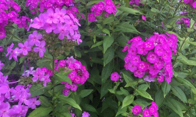 Four Perennial Plants Easy Care Exotic