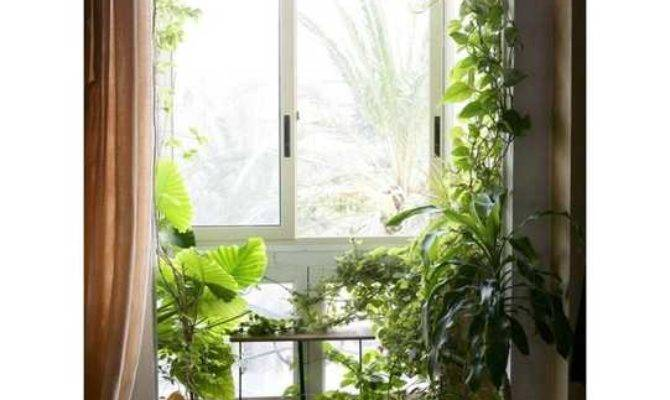 Gorgeous Phyto Design Ideas Indoor Plants