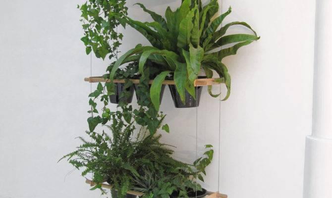 Great Ideas Display Houseplants Indoor Plants