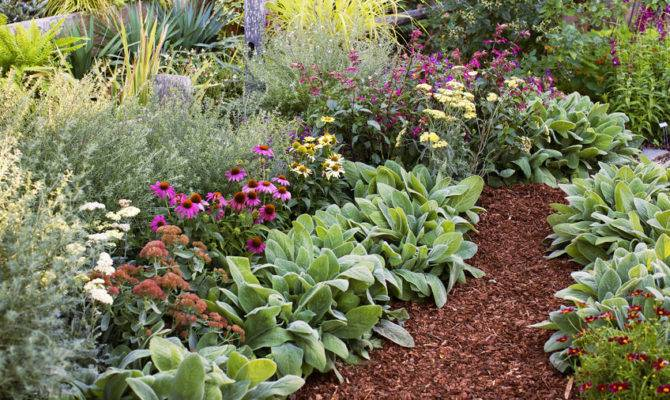 Guide Low Maintenance Gardening Sunset Magazine