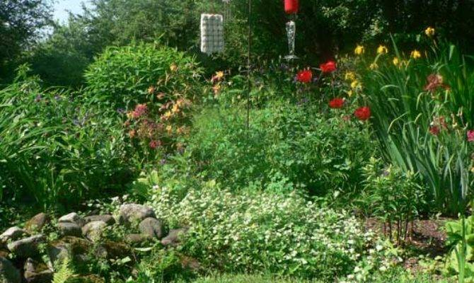 Hummingbird Garden Plans Creating