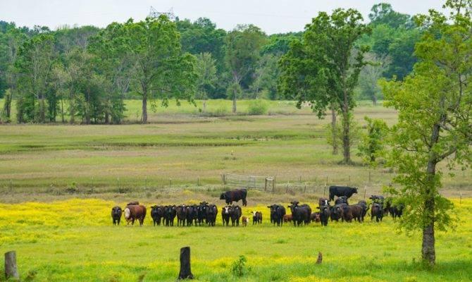 Mount Vernon Ranch Republic Ranches