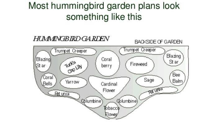 Planning Hummingbird Heaven Water Wise