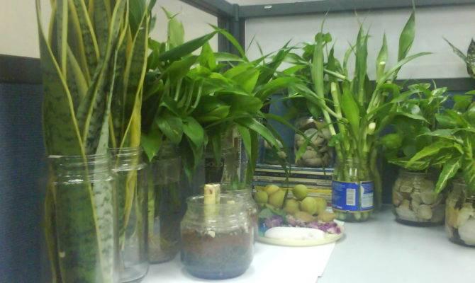 Plant Ideas Indoor Plants Decoration Interior Design