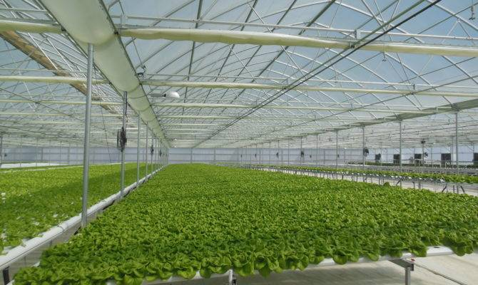 Range Agra Tech Continental Greenhouses Gogreen