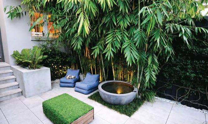 Real Backyard Inner City Courtyard Garden Design