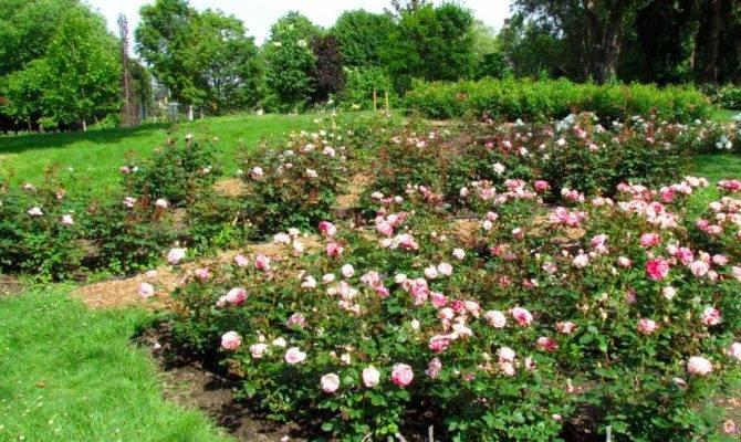 Rhododendron Gardens Rose Garden Design Legend Map Name