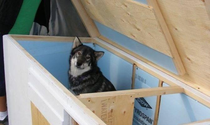 Room Dog House Plans Awesome Enchanting