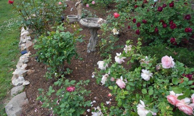Rose Back Garden Ideas Extraordinary Design