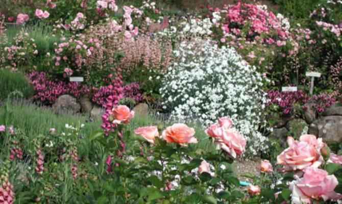 Rose Garden Design Planning