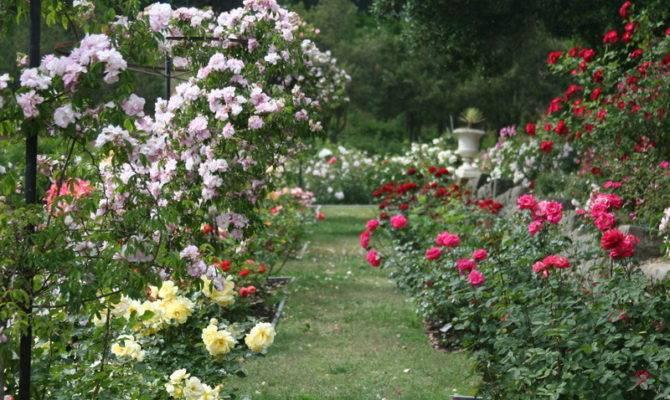 Rose Garden Ideas Native Design