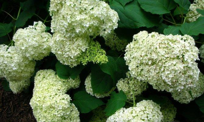 Shade Loving Plants Woodland Garden
