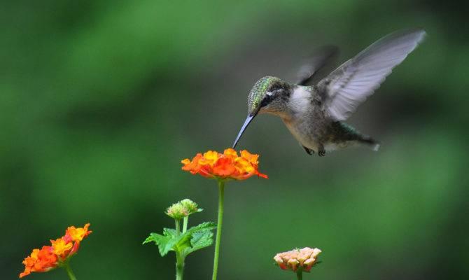 Similiar Hummingbird Garden Keywords