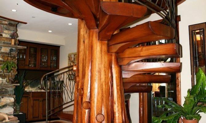 Spiral Staircase Fallen Cedar Tree