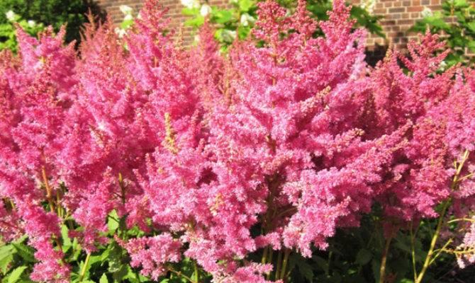 Top Shade Loving Plants Outdoortheme