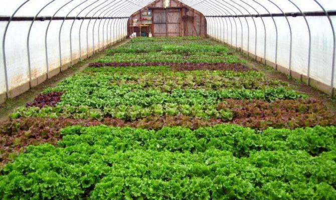Winter Greenhouse Plans Large Green Home