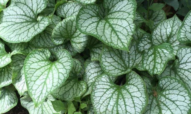 Zone Shade Gardening Choosing Cold Hardy Plants